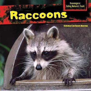 Raccoons   Rosen Publishing