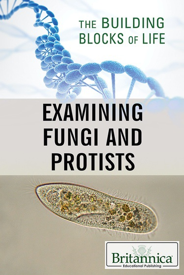 Examining Fungi and Protists book cover image